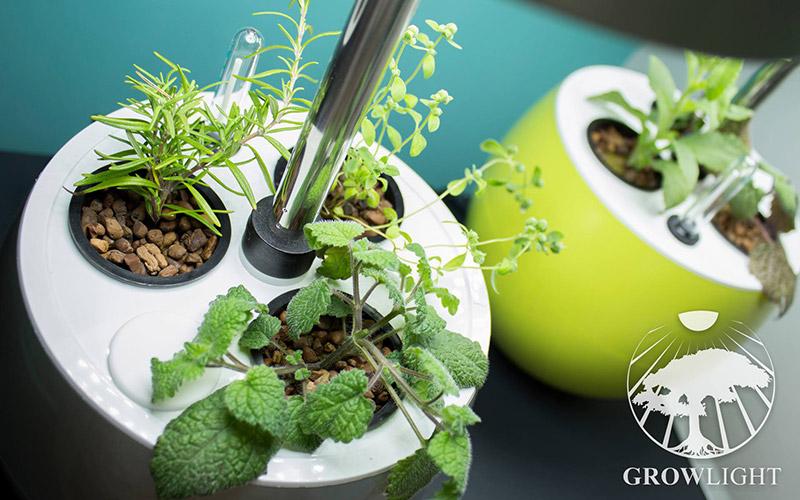 Bylinky do kuchyně - interiérové doplňky Growlight
