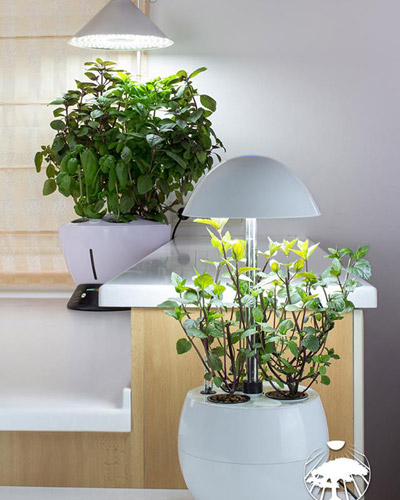 Growlight - bylinky ve Vaší kuchyni