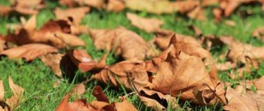 Hrabání listí - Šikovný manžel Košice