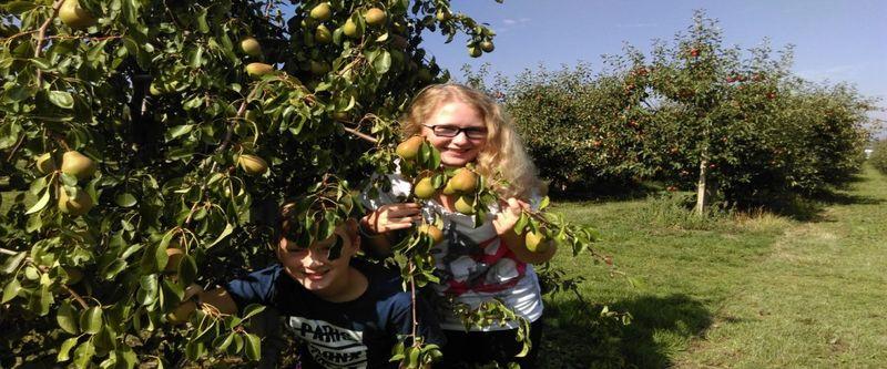 Akční nabídka zdravého ovoce - Sady Schwarz Vranov