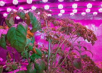 Pěstování bylin v kuchyni Growlight Plzeň
