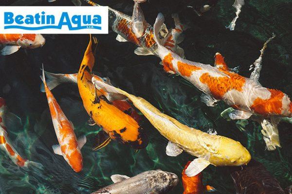 Beatin Aqua - prodej akvarijní techniky